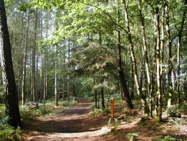 La vallée boisée de Corbinières : un espace naturel du Département d'Ille-et-Vilaine