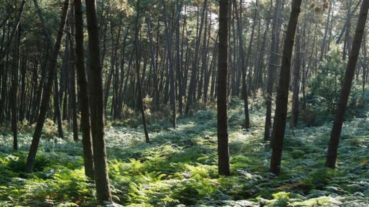 vallée boisée de Corbinières