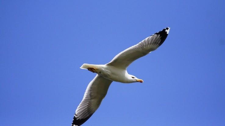 oiseau du littoral © C. Hervé