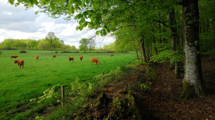 Bois de la Motte, Maen Roch