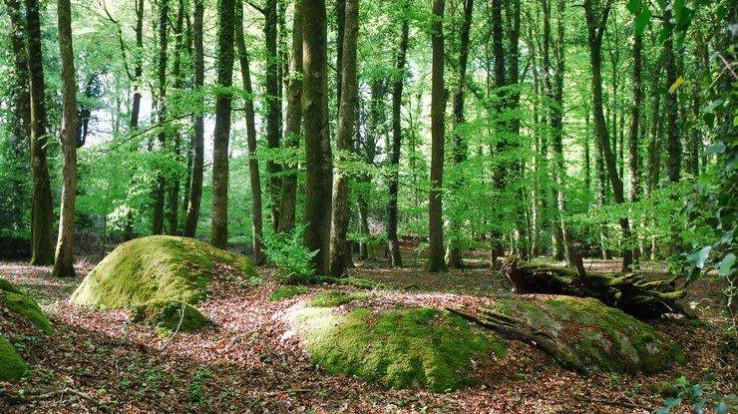 Hêtres et affleurements rocheux au Bois de la Motte