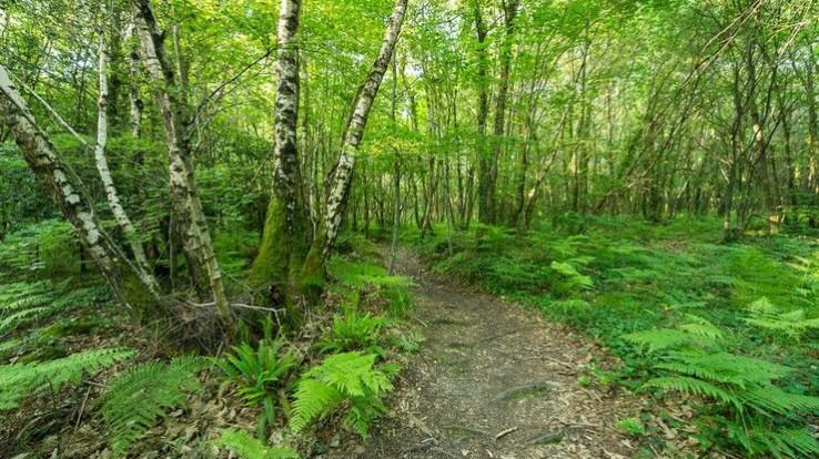Sentier dans le bois de Rumignon