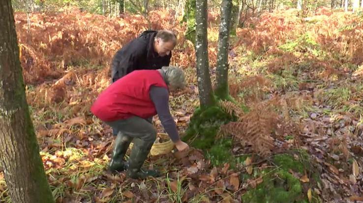 Cueillette des champignons en Ille-et-Vilaine : les bons conseils
