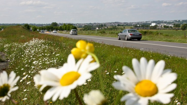 Fleurs en bord de route, mobilité pour l'accès à l'emploi en Ille-et-Vilaine