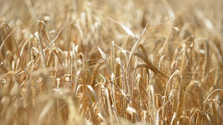 sites de rencontre pour les agriculteurs biologiques Comment faire un bon profil de rencontre en ligne pour les gars