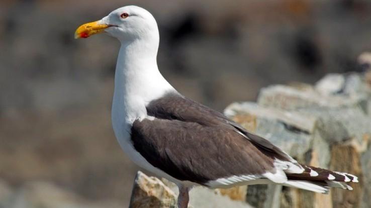 Oiseau du littoral