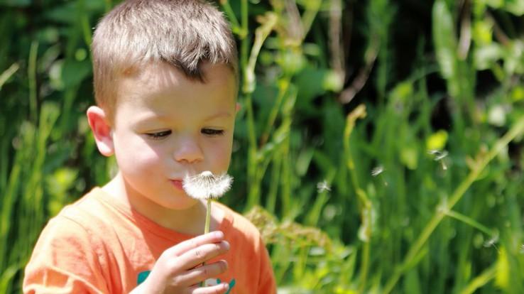 Enfant souffle sur une fleur de pissenlit