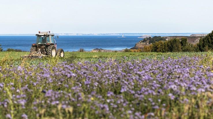 champs et tracteur
