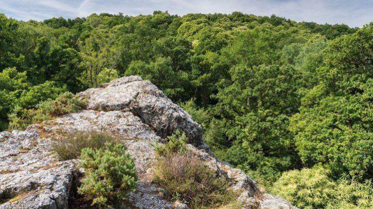 Les roches du Saut-Roland et la forêt