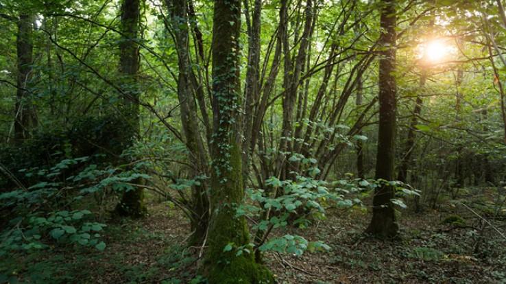 le bois de Soeuvres à Vern-sur-Seiche, espace naturel départemental © E. Berthier