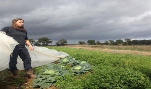 Qui sont les agricultrices d'Ille-et-Vilaine ?