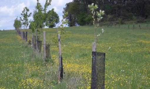 Appel à projet : Développer l'agroforesterie en Ille-et-Vilaine