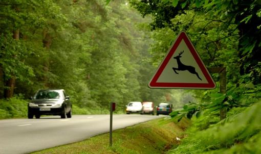 2 x 2 voies Rennes-Angers : automobilistes, faune et flore à l'aise en forêt d'Araize