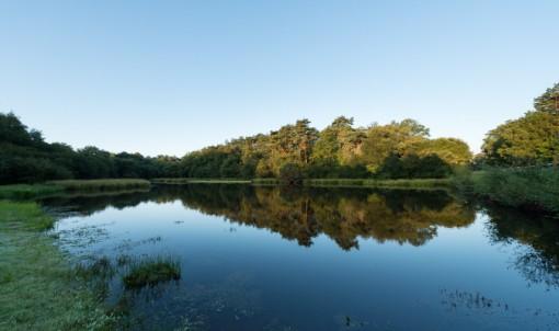 l'étang de l'abbaye de Paimpont : un espace naturel du Département d'Ille-et-Vilaine © Emmanuel Berthier