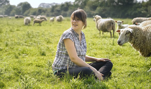 Les agneaux du Verger, l'élevage en direct