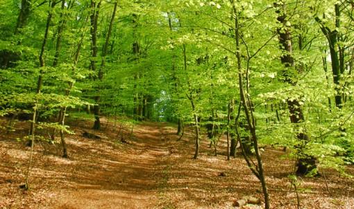 4 balades en forêt à faire cet automne en Ille-et-Vilaine