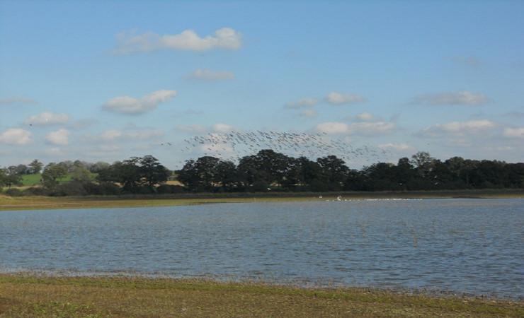 Envol d'oiseaux dans la réserve ornithologique © Département d'Ille-et-Vilaine