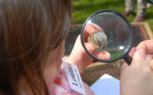 Escargot observé à la loupe
