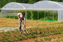 Producteur de légumes au travail, aides aux agriculteurs