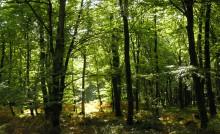 La Forêt de la Corbière, Marpiré