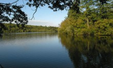 Forêt de la Corbière et son étang à Marpiré