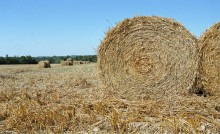 Bottes de paille dans un champ, aides aux agriculteurs
