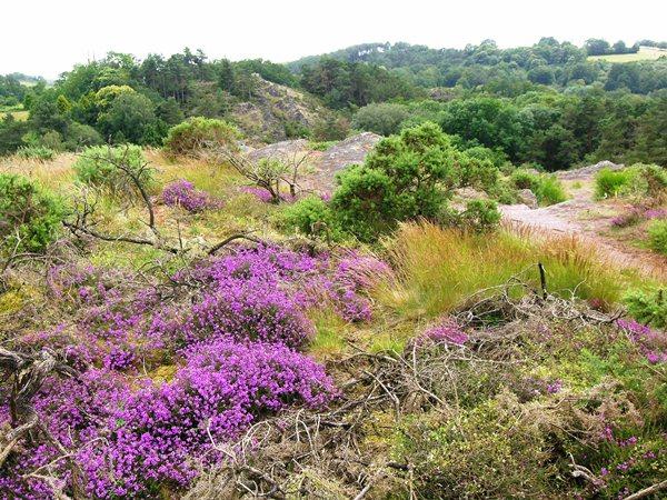 La vallée du Canut, un espace naturel départemental © Cg35